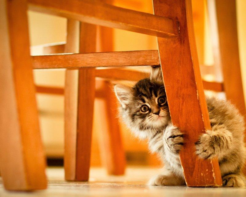 Котик за табуреткой