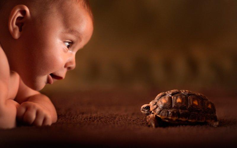 Малыш и черепашка