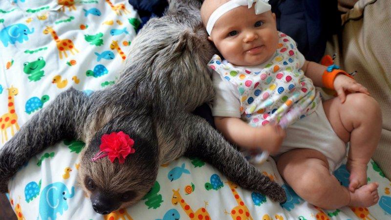 Малыш с ленивцем