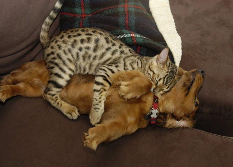 Кот и пес спят рядом