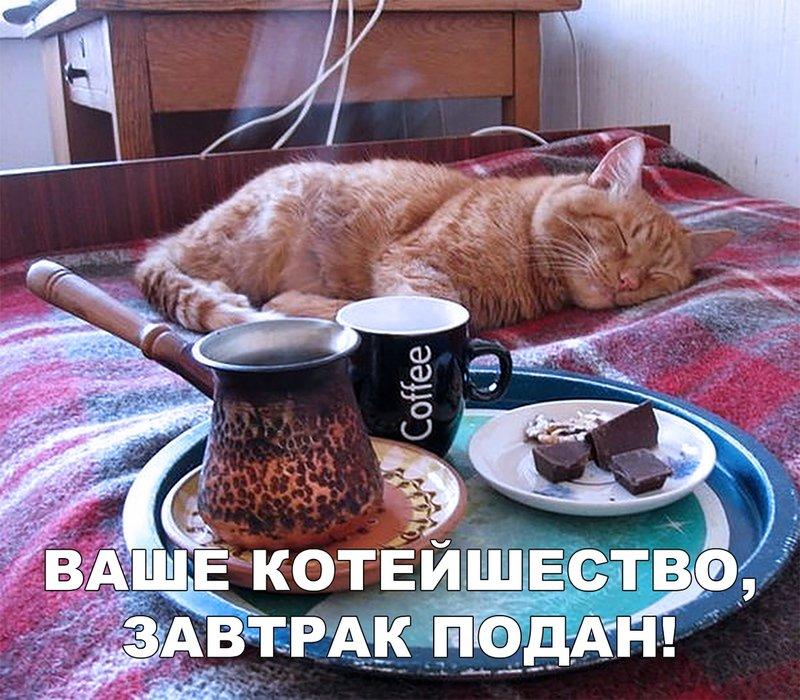 Кот и завтрак