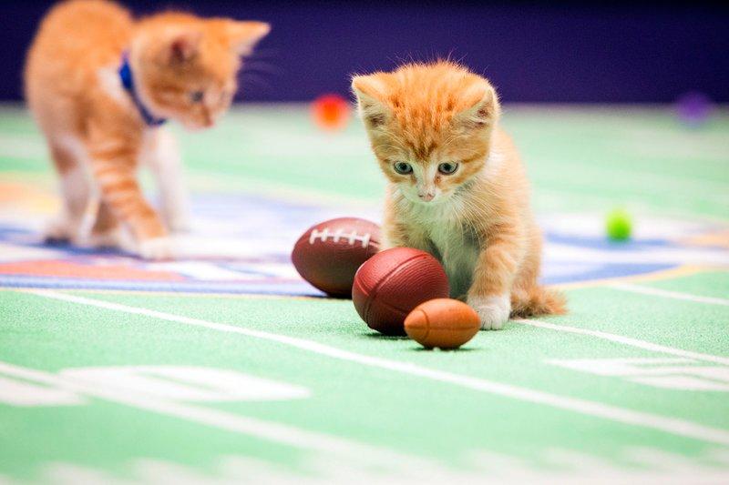Котята с мячиками