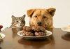 Фото собак с кошками