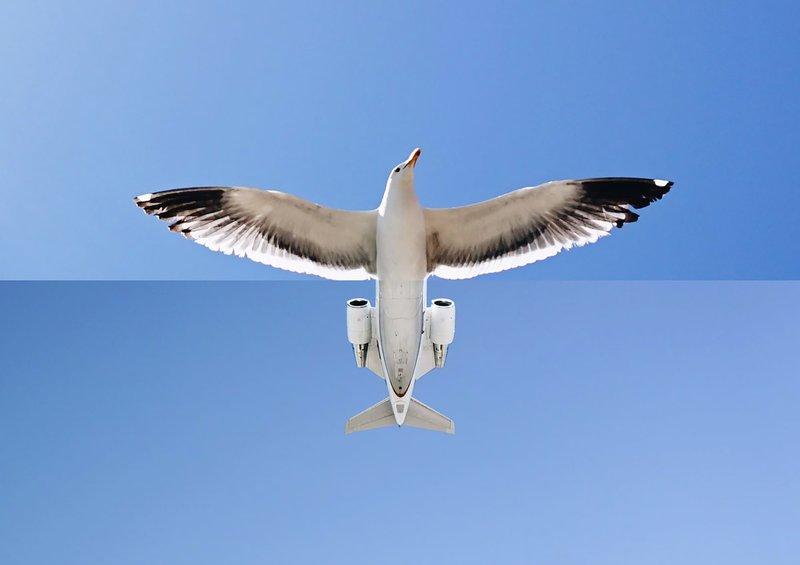 Птица-самолет
