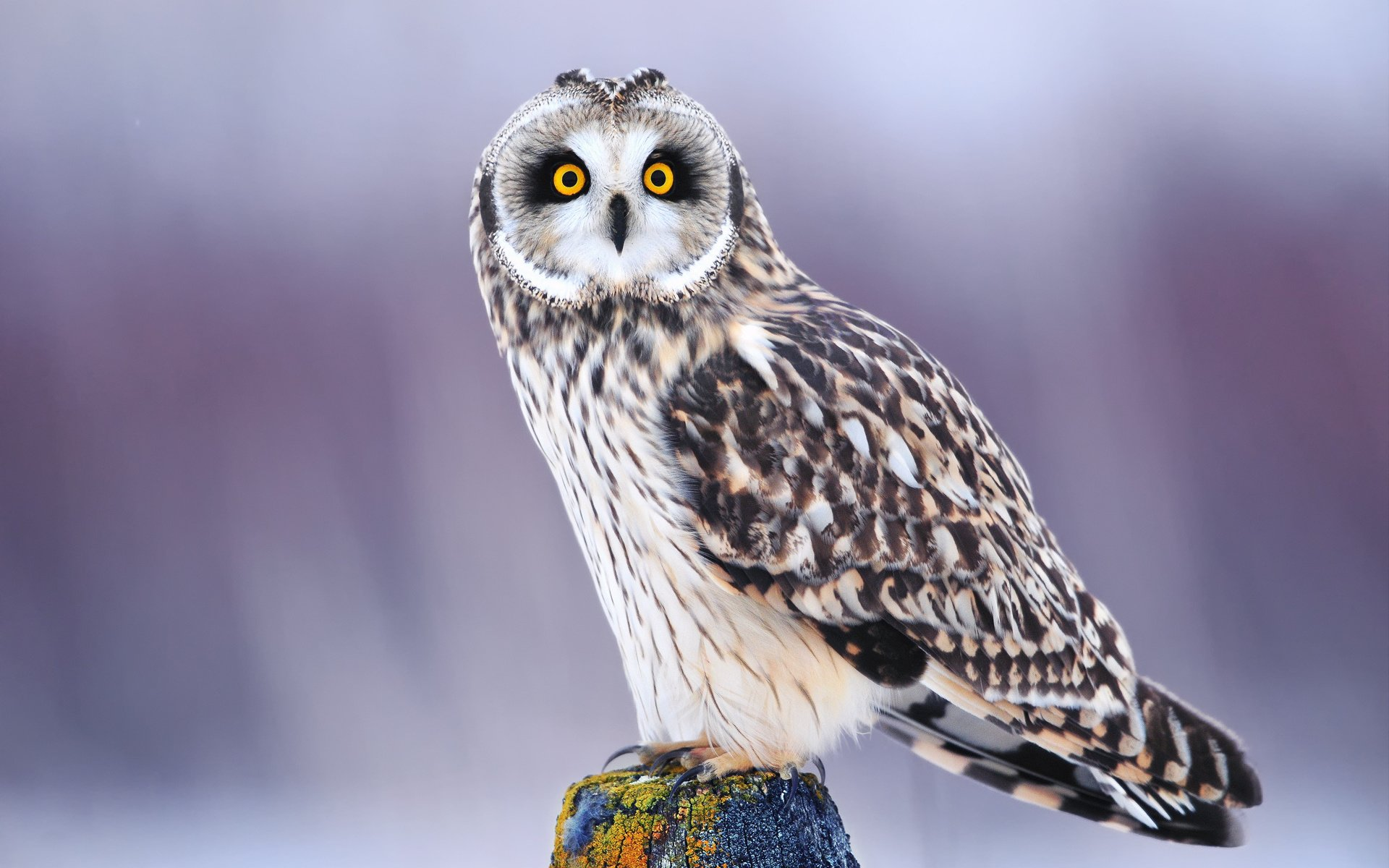 Красивые картинки животные сова