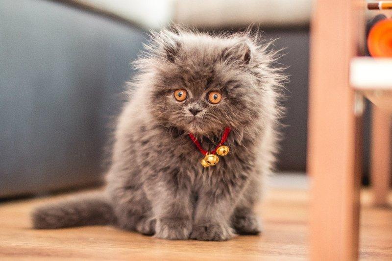 Серый смешной котик