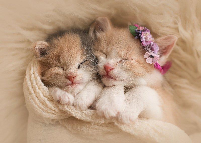 Два милых котенка