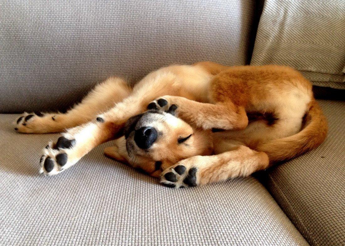 Спит прикольные картинки, обнимаю