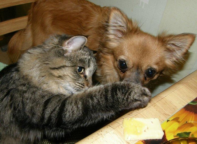 Кот накрывает лапой нос пса