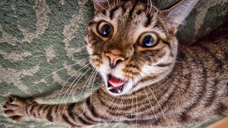Смешная мордочка кота