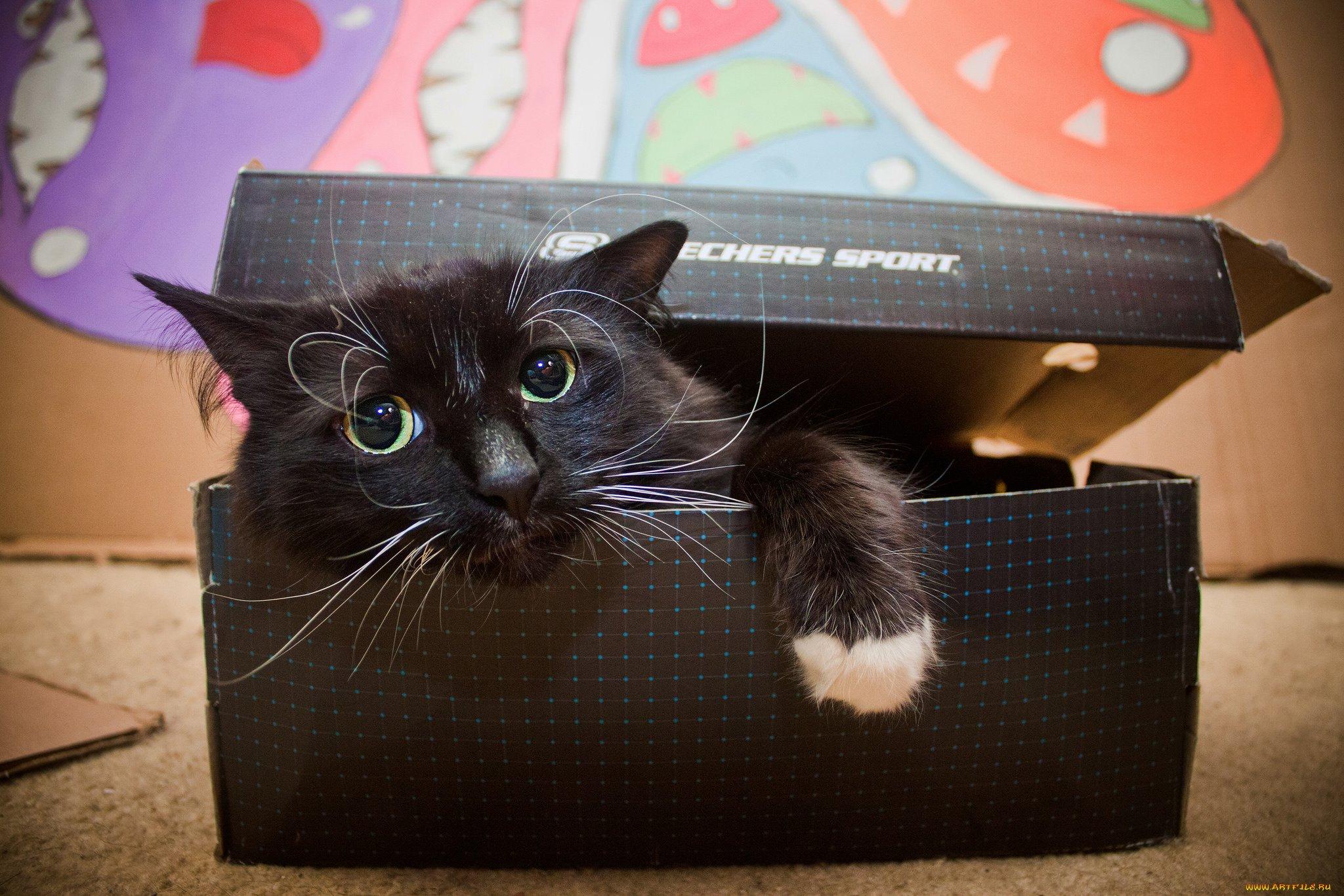 кот в коробке картинки материал применяется для