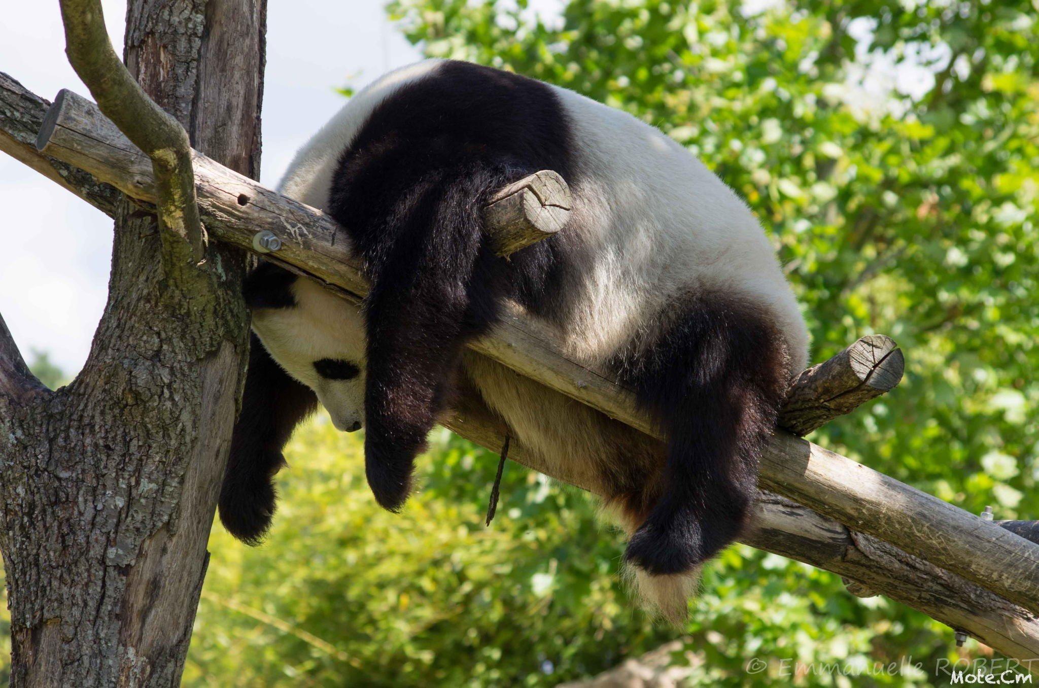 смешные фото спящих животных ссылке мне предложили