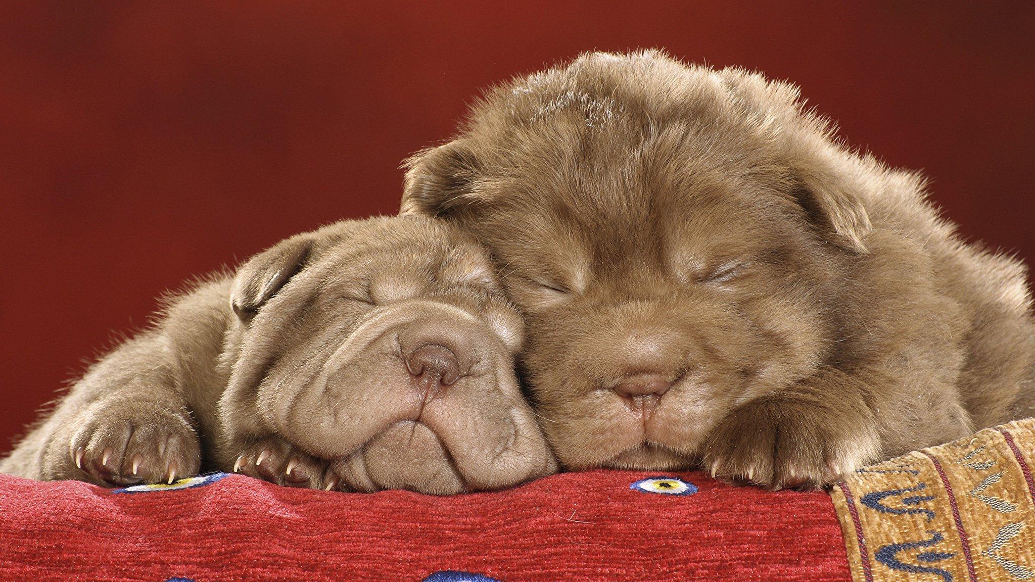 Картинки сладких животных