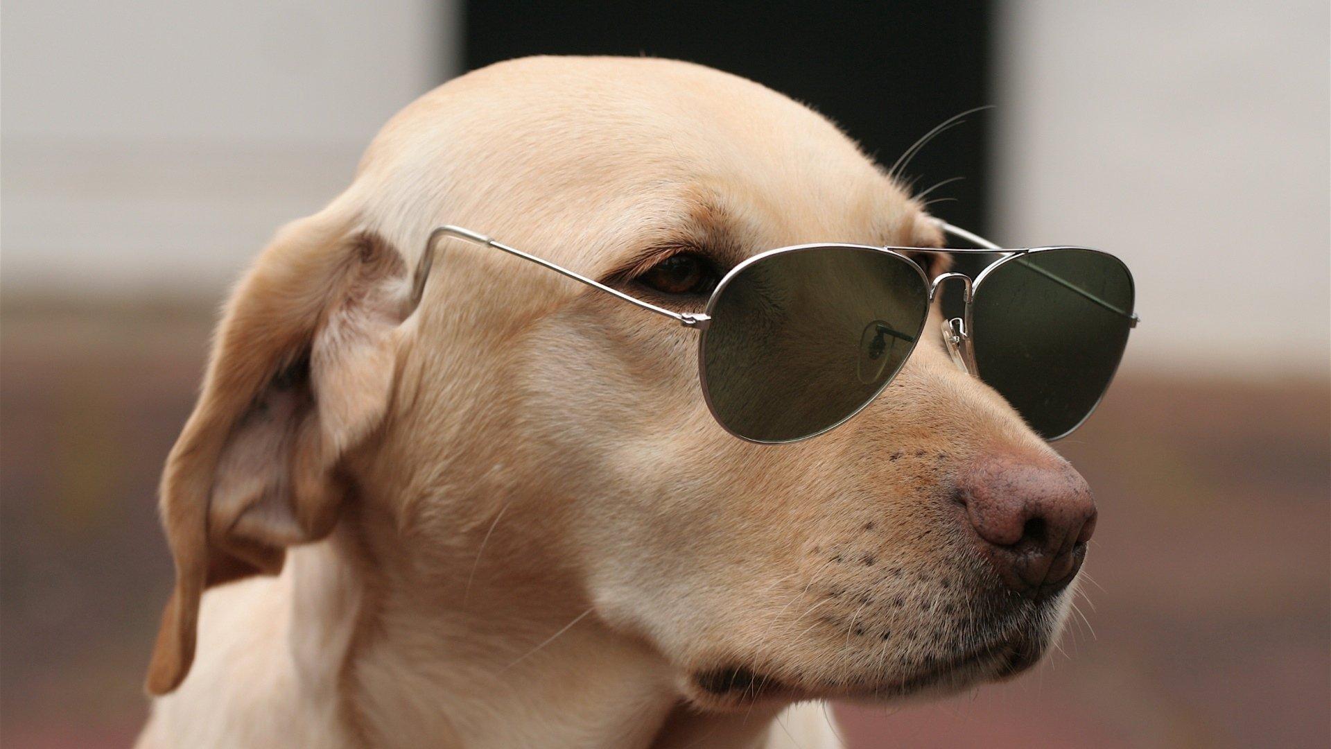 Комплименты мужчине, прикольные картинки фото с собаками