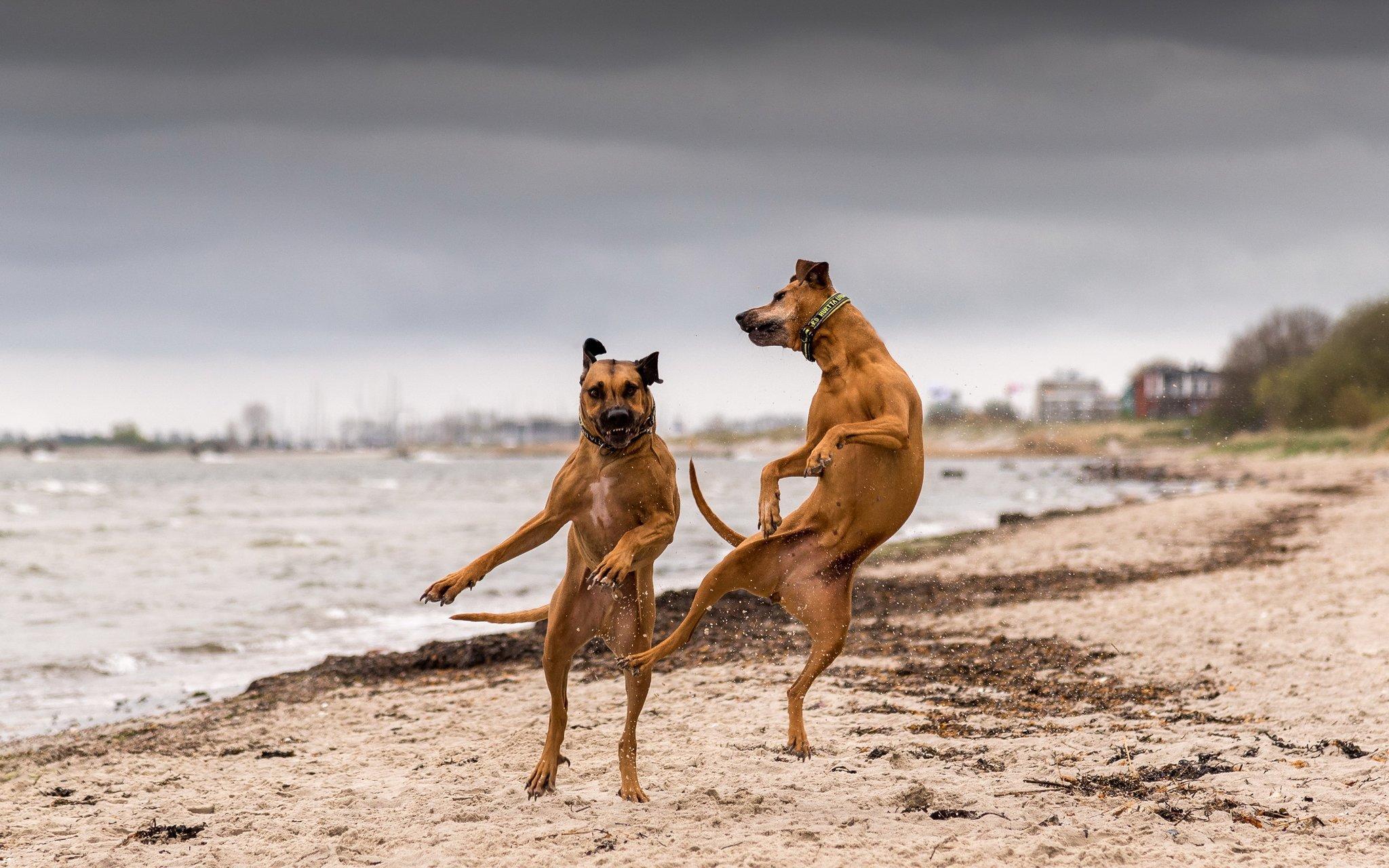 Собака прикольно танцует, открытки про