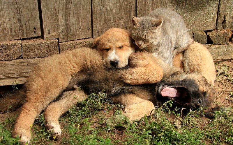 Щенки и кот