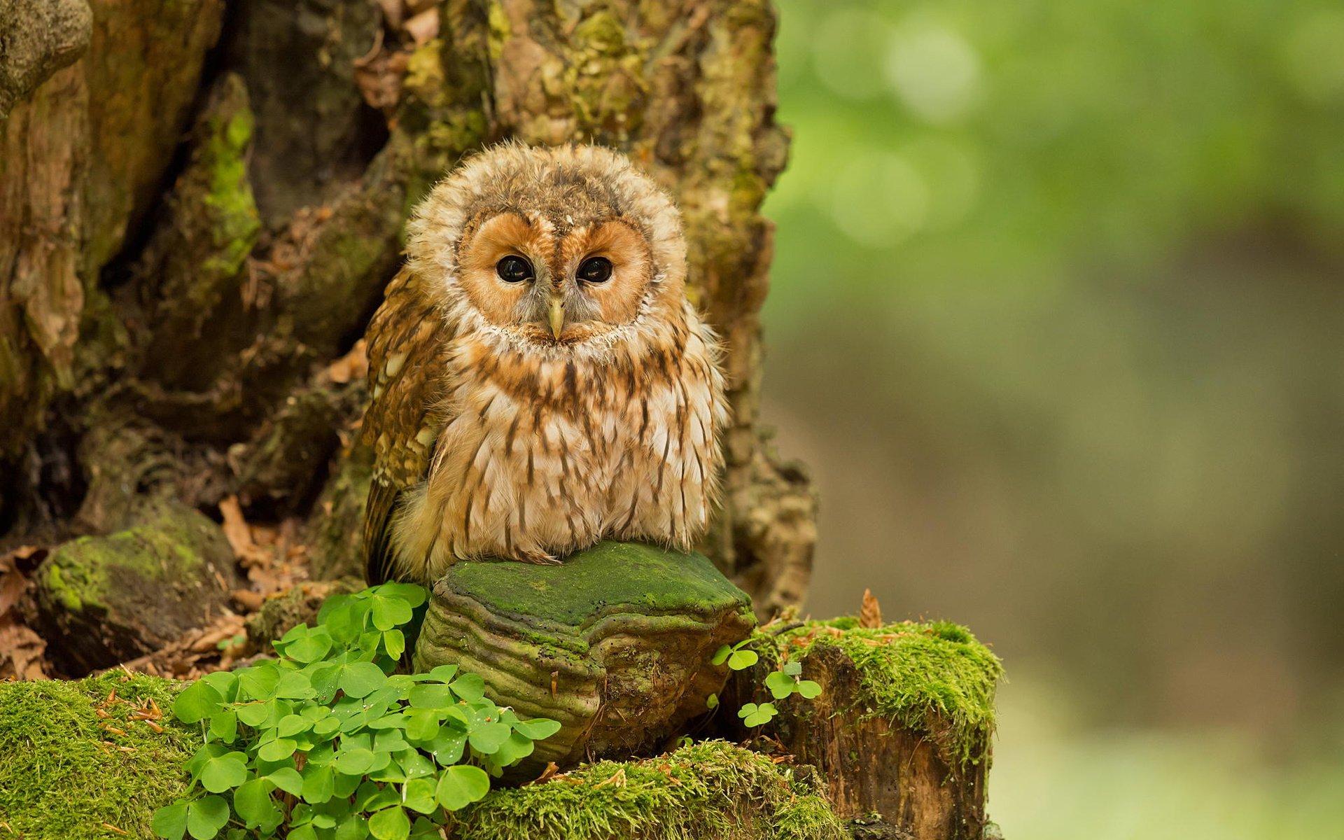 желание прикольные фотографии птиц и животных в лесу прежде, дембеля