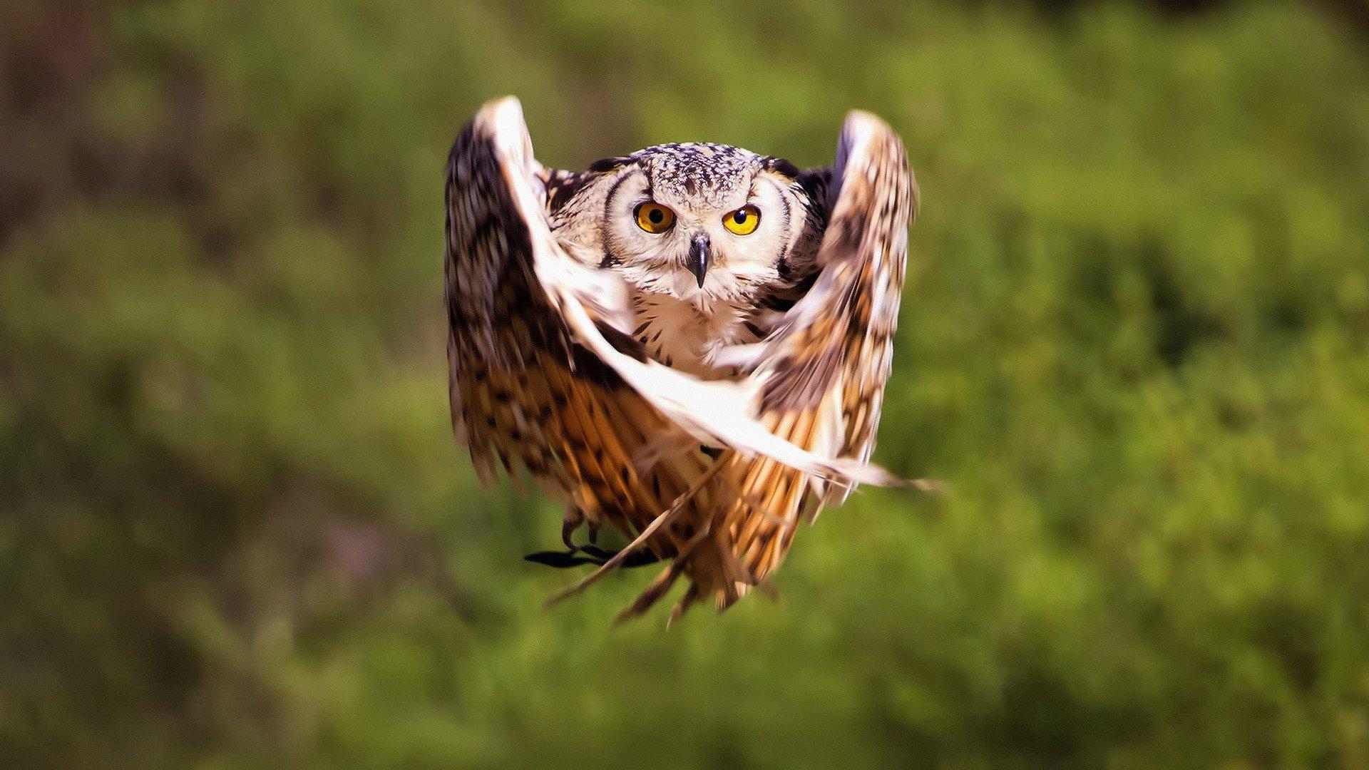 красивые совы картинки смешные стедикам может быть