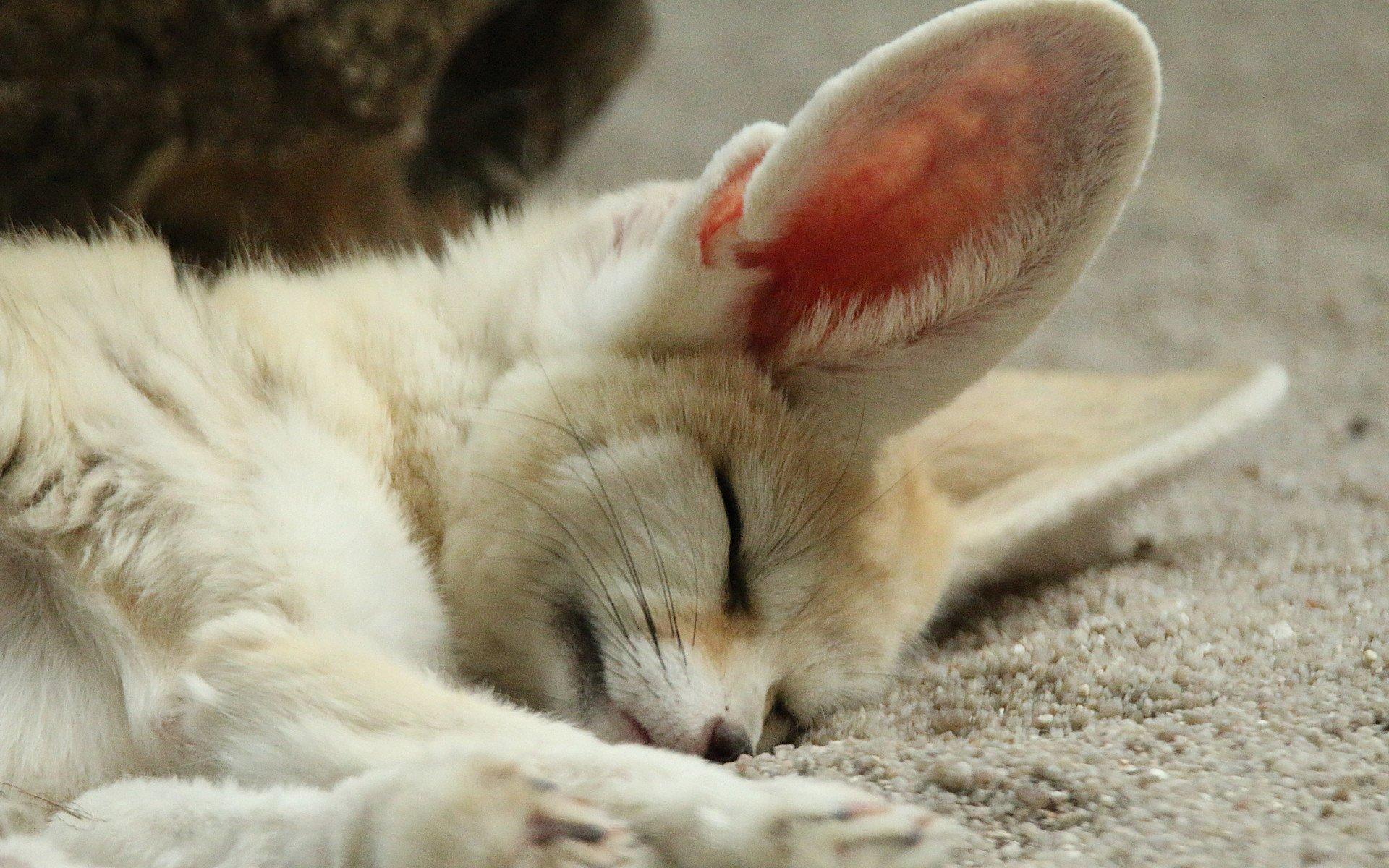 Картинки спящие животные, ивановне
