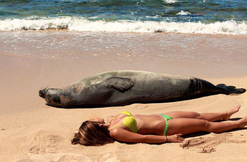 Девушка и тюлень