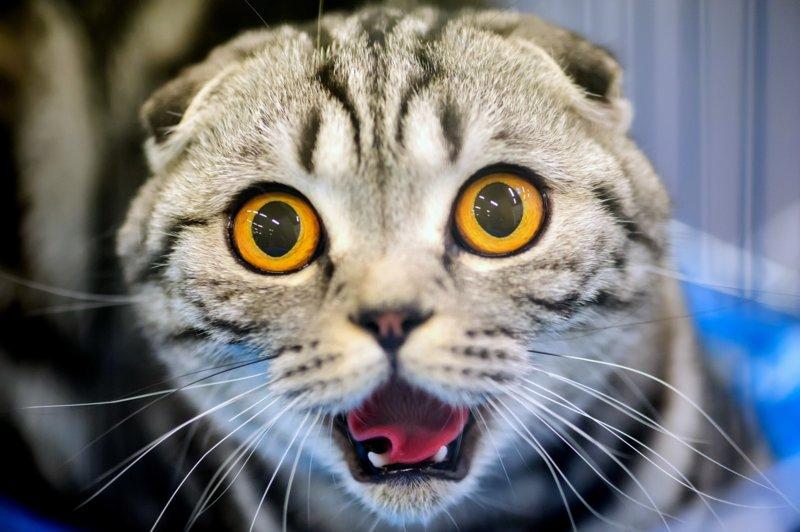 Удивленный котик улыбается