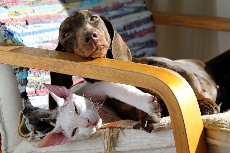 Пес с котом отдыхают