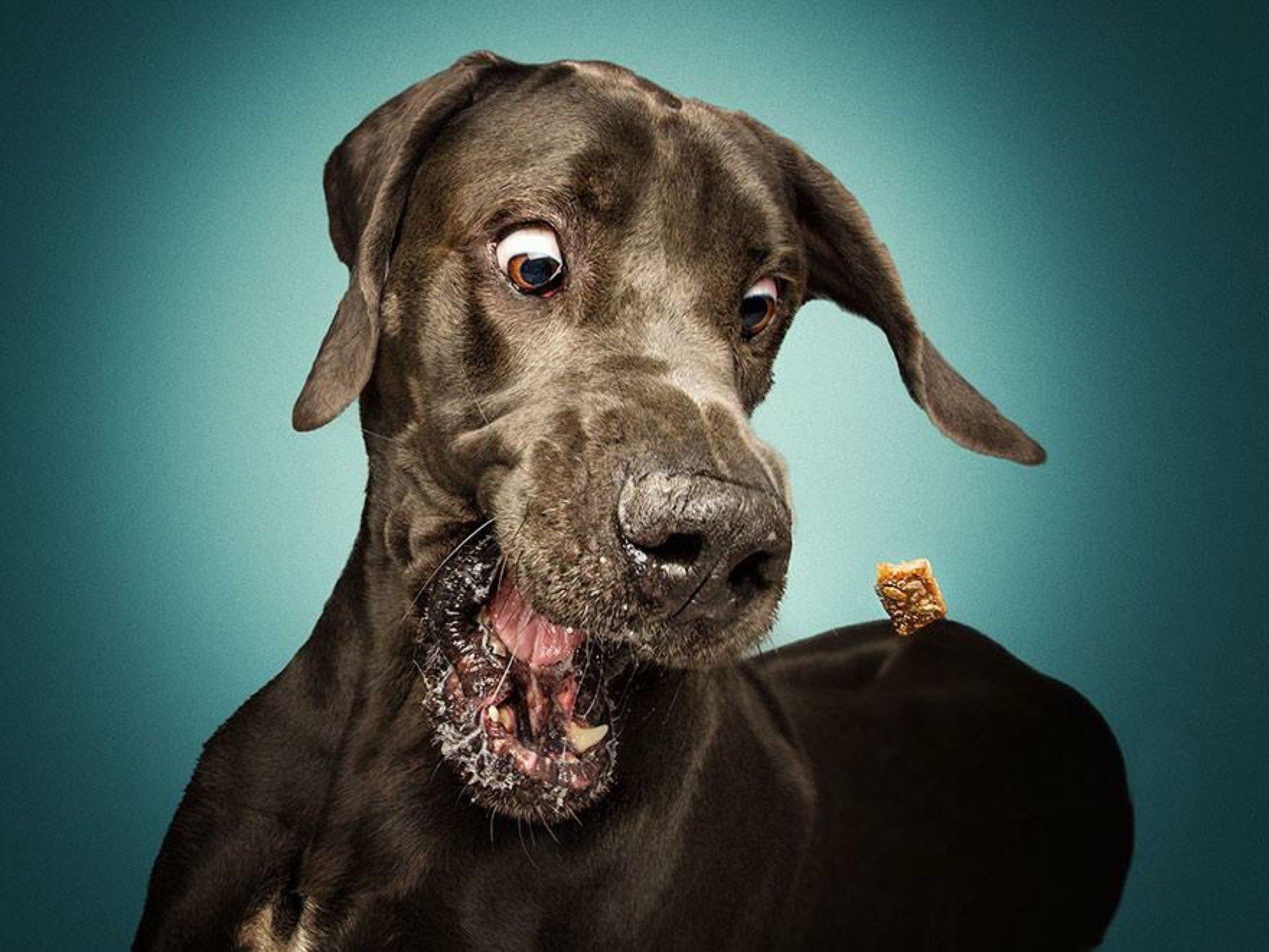 Картинка собака прикол