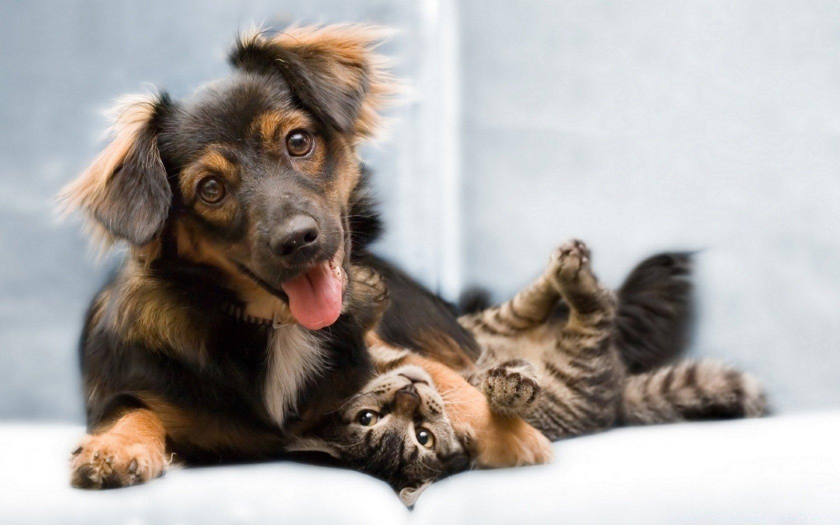 Картинка собака дружок