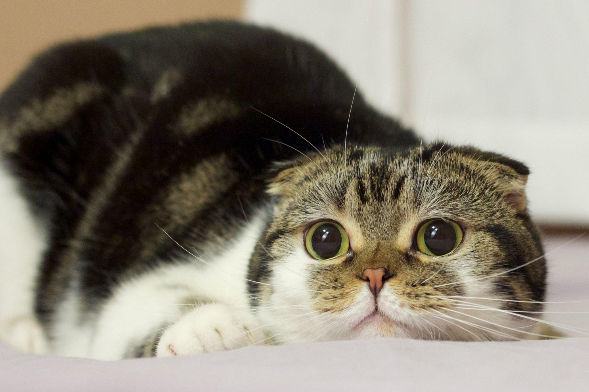 Картинки кошек смешно, кбр анимированные