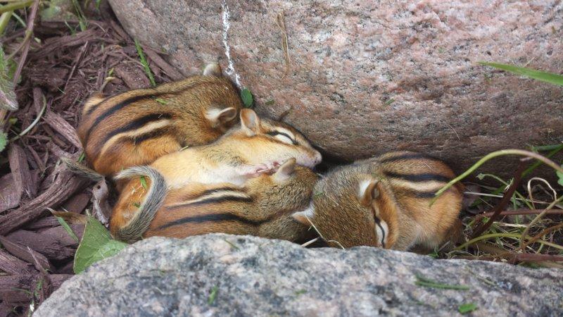 Зверюшки спят