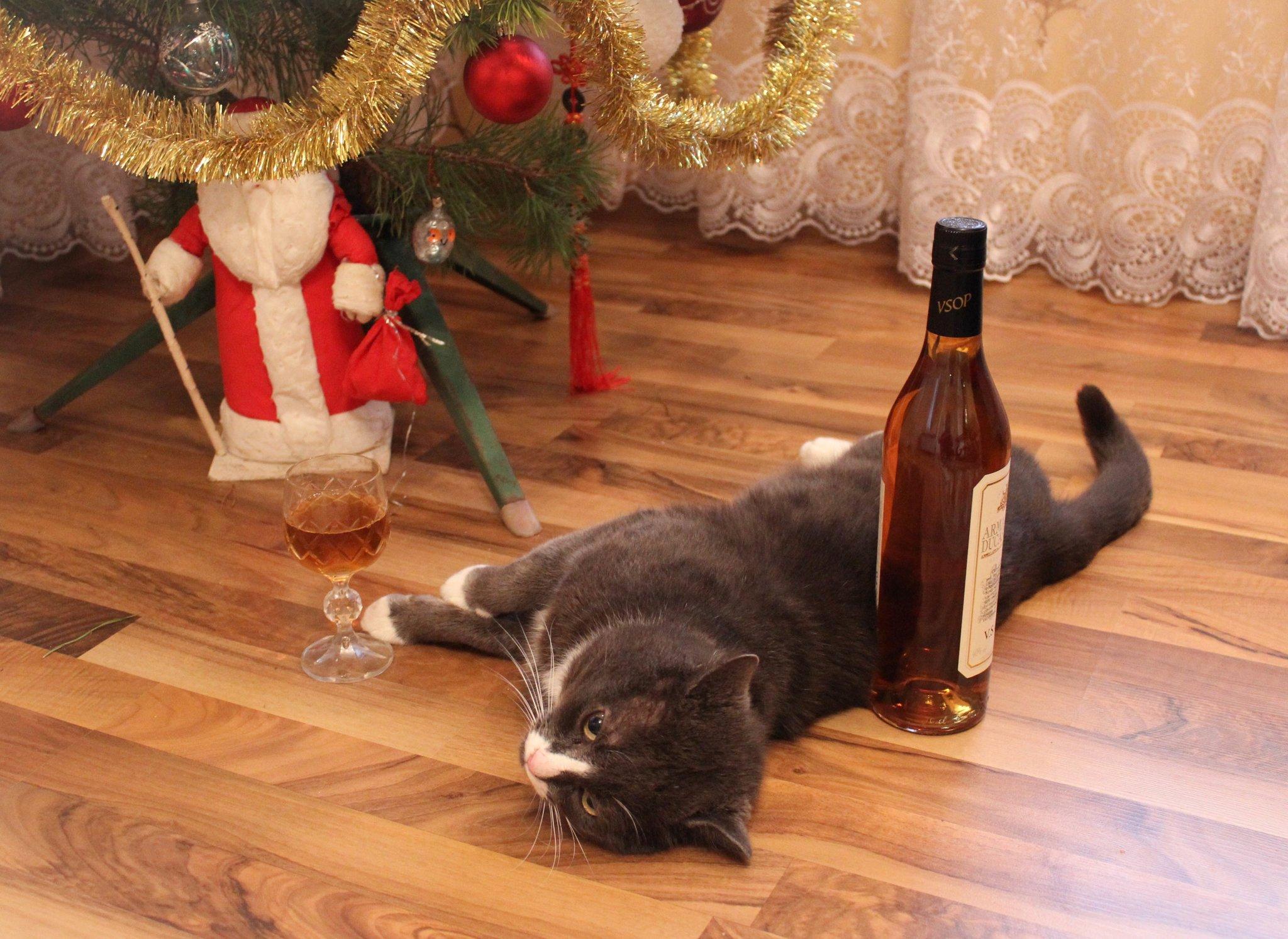 Приколы после нового года в картинках