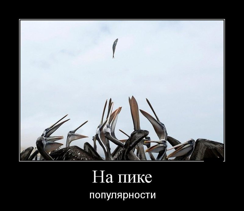 Чайки и рыба