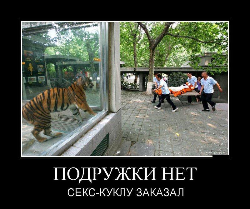 Тигр в клетке зоопарка