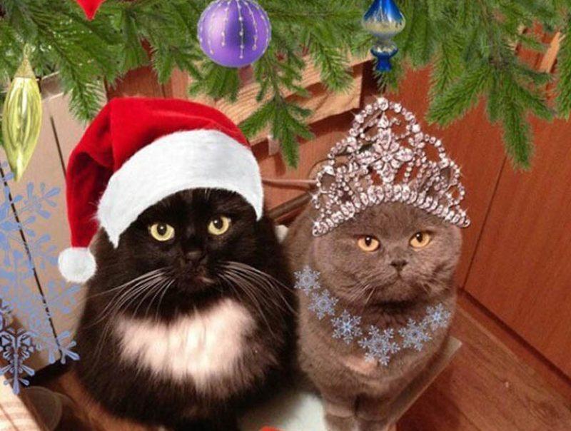 Коты Дед мороз и Снегурочка