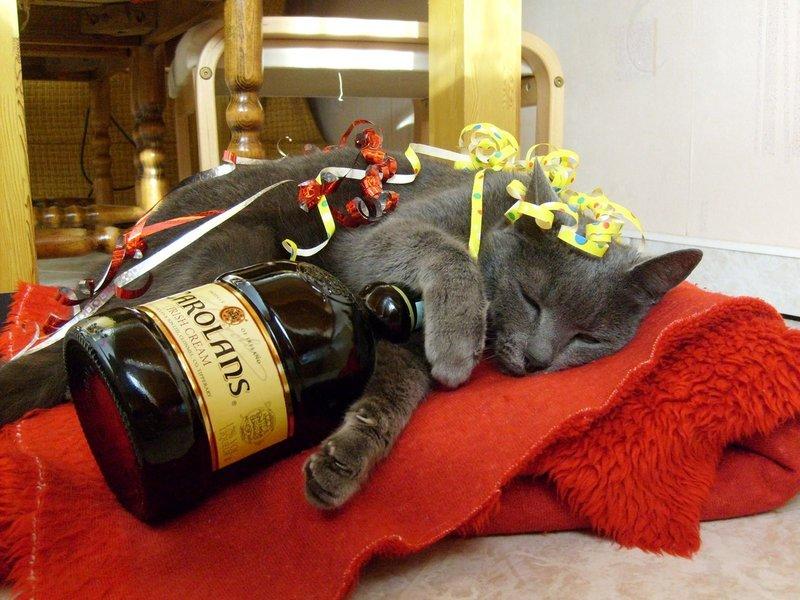 Котик спит с бутылкой