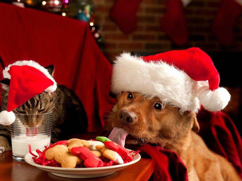 Кот с собакой едят печенье