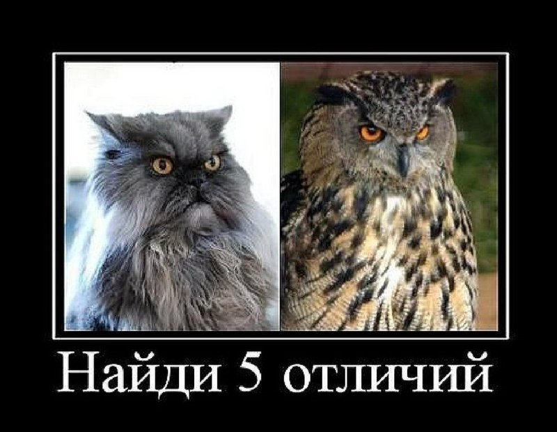 Сова и кот
