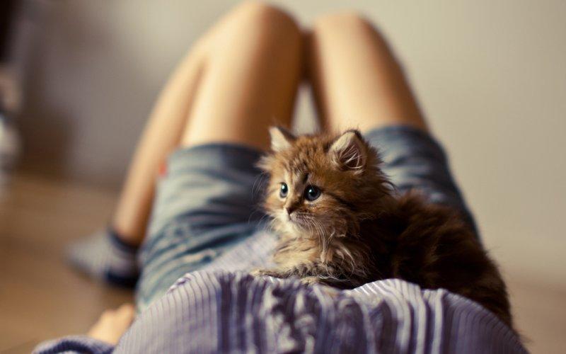 Котик на животе девушки
