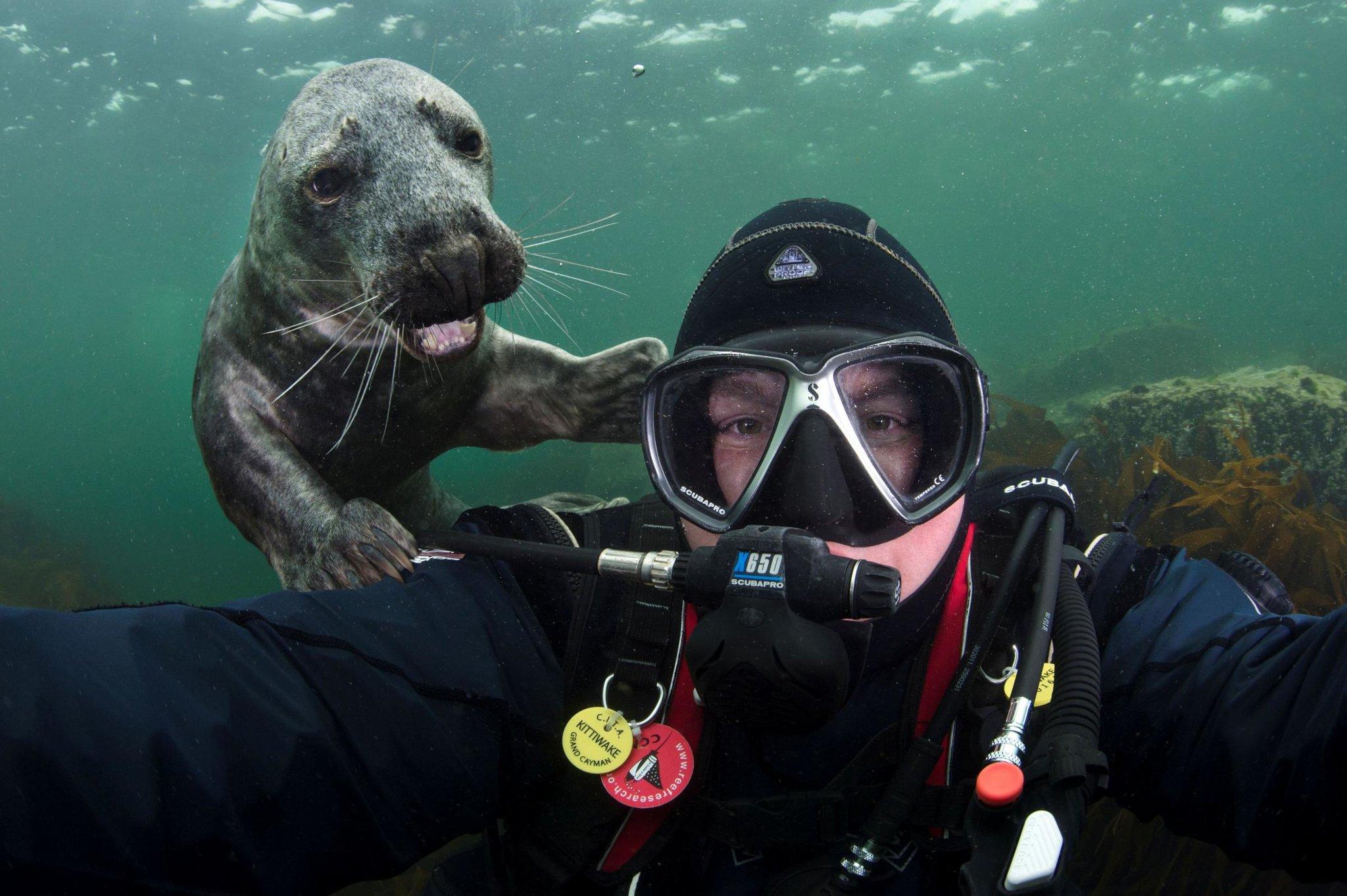 видов отличаются аквалангисты картинки смешные использовать его