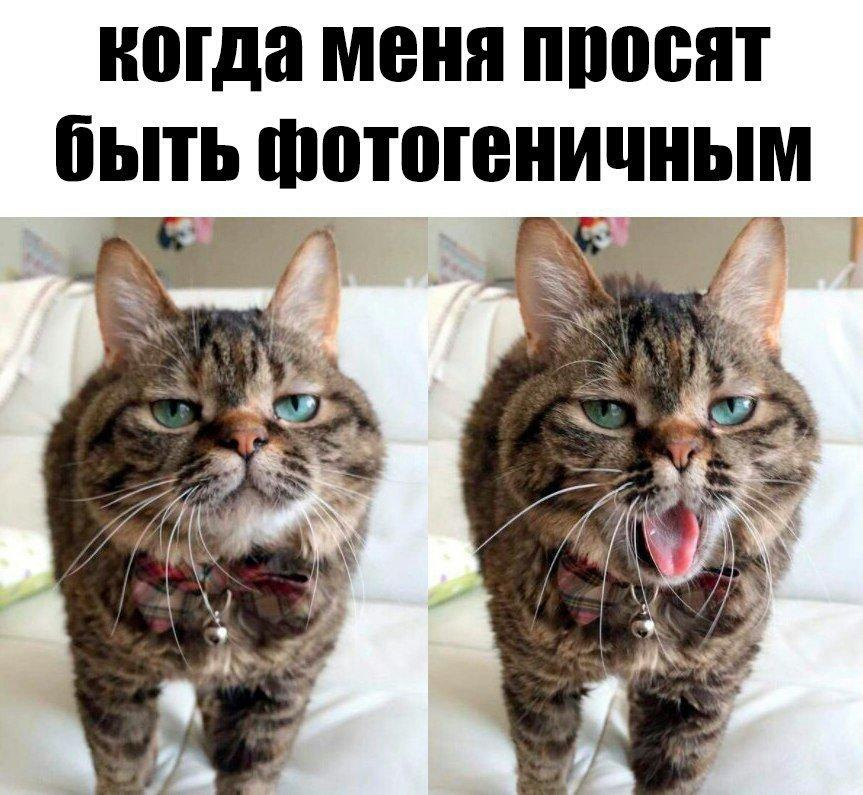 Забавные картинки для поднятия настроения