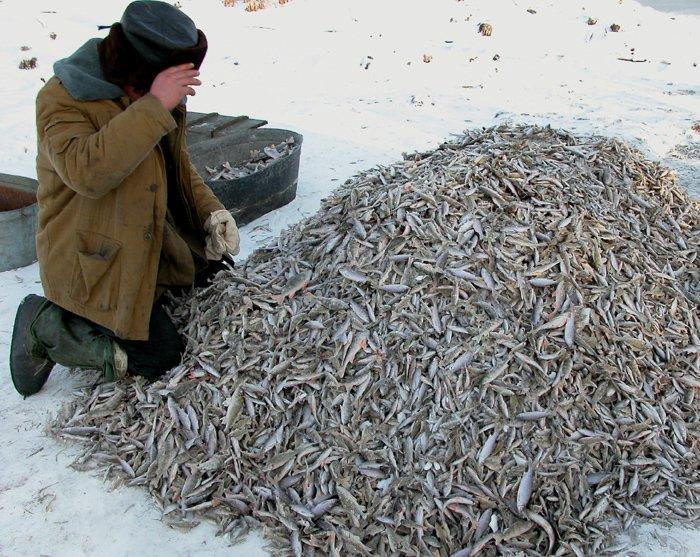 как сохранить улов после рыбалки