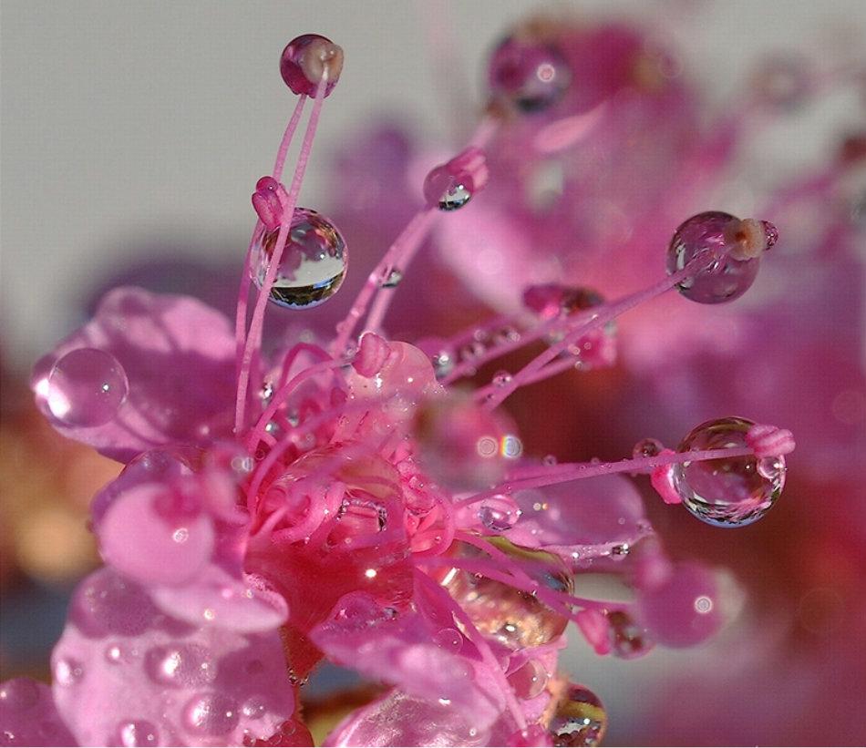 Цветы необычной красоты 270