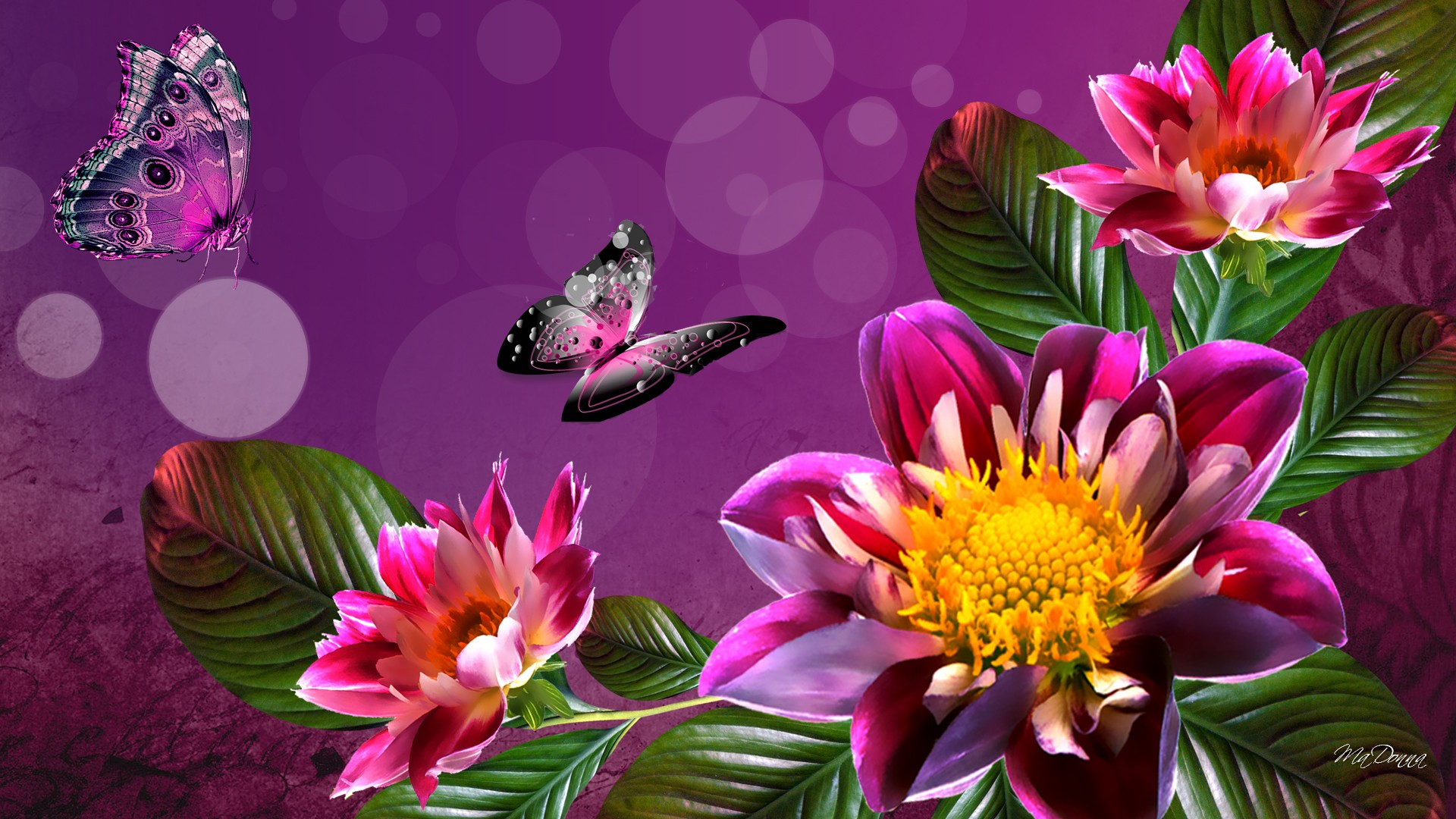 Обои на рабочий стол цветы живые обои