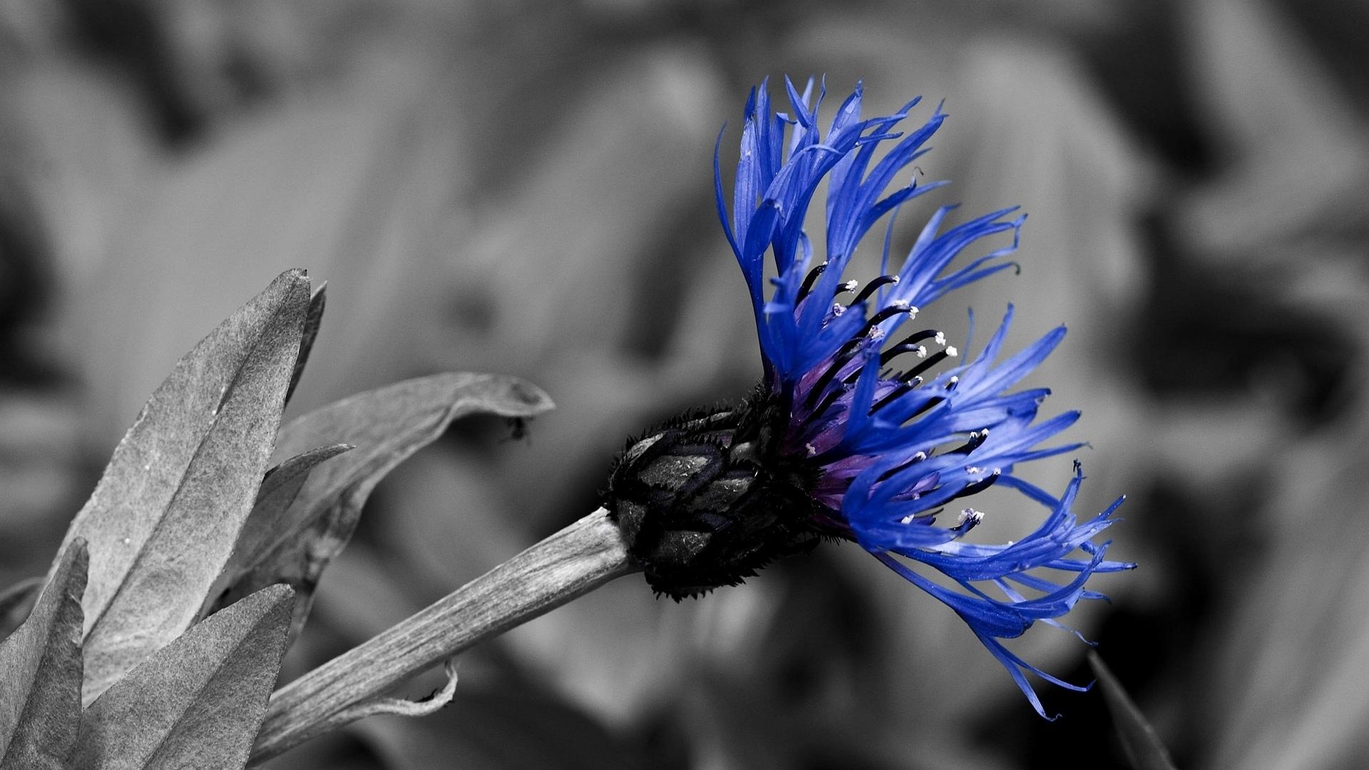 Как на черно белом выделить цветок