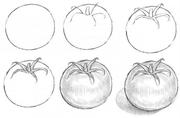 Лучшие сорта и гибриды томатов описание фото названия