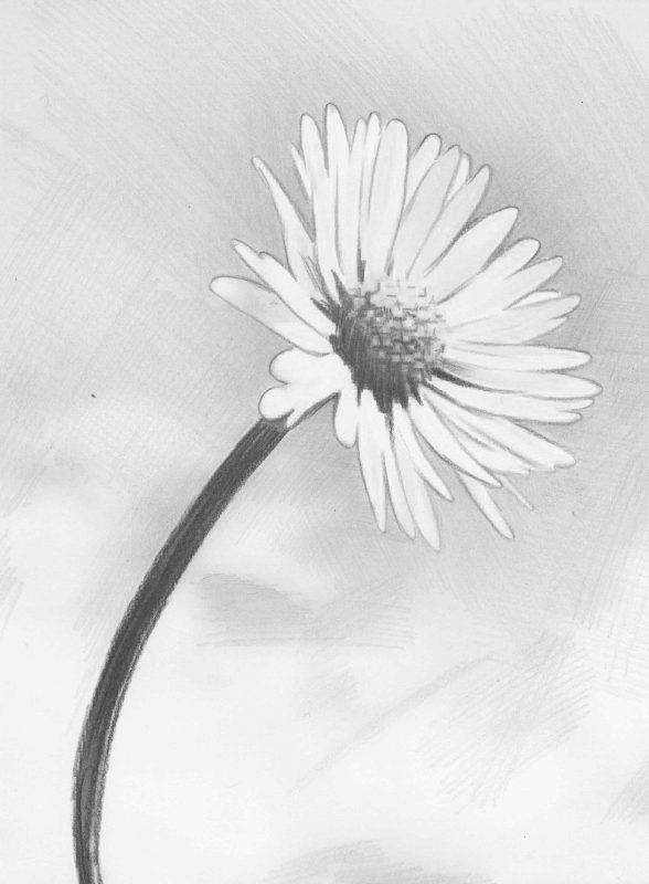 Рисунки карандашом для начинающих поэтапно цветы