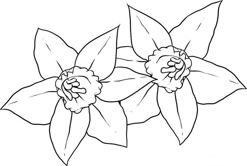 Показать рисунок цветы