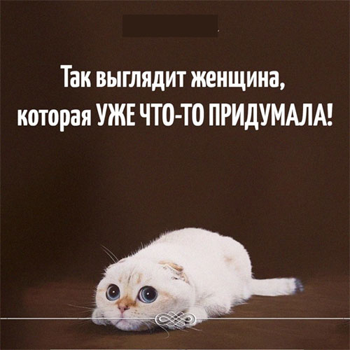 Смешные картинки животных со смешными надписями