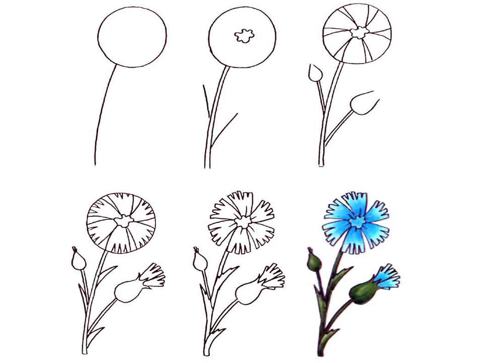 Как рисовать цветы пошаговое