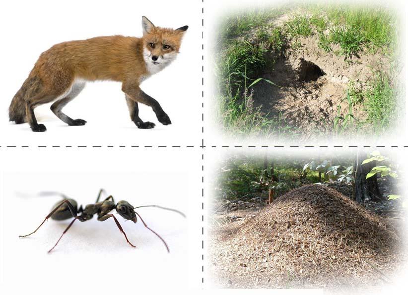 Кто где живет домашние животные картинки для детей карточки